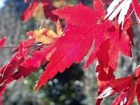 1130嵐山nct_PC037911a.jpg