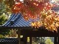 1208鎌倉DSC05876a.jpg